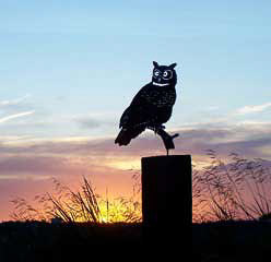 Great horned owl metal sculpture image