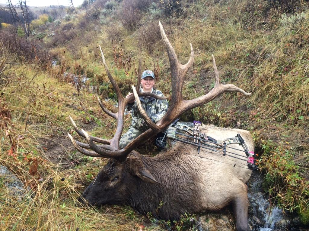Sara's Elk from 2014