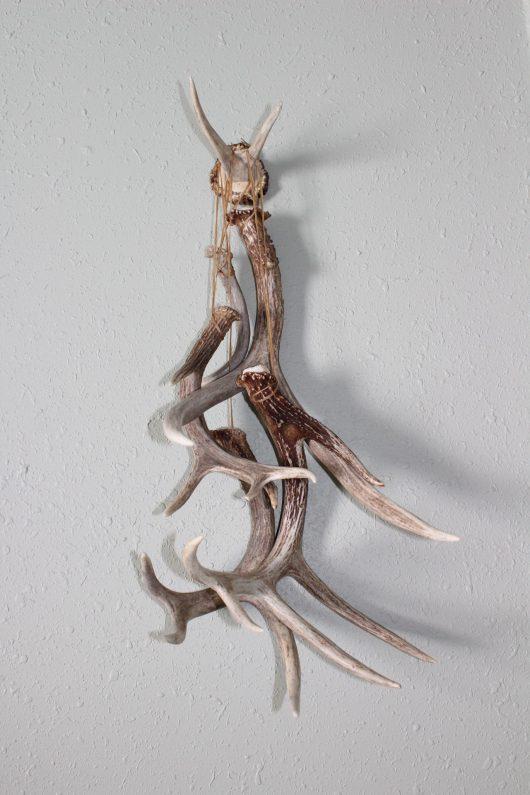 Elk Antler Burr and Antler hanger for sale
