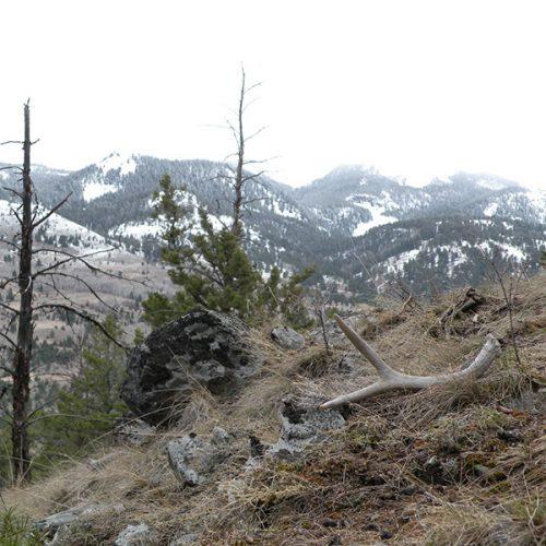 An elk antler on a ridge
